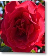 Red Rose Metal Print by Saifon Anaya