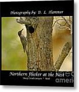 Red-shafted Flicker Metal Print