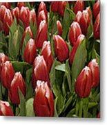 Red Tulip Heaven Metal Print
