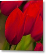 Red Tulips In Holland Metal Print