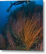 Red Whip Fan Coral With Diver, Papua Metal Print