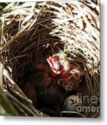 Red-winged Blackbird Babies And Egg Metal Print