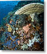 Reef Scene With Corals And Fish Metal Print