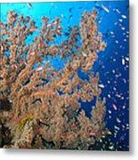 Reef Scene With Sea Fan, Papua New Metal Print