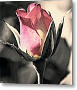 Rita Rosebud Pink Metal Print