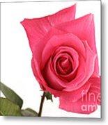 Rose Blooming Metal Print