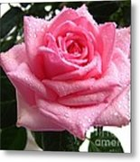Rose With Water Droplets Metal Print