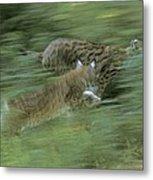 Running Lynx Metal Print