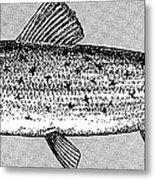 Salmon Metal Print by Granger