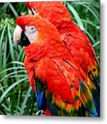 Scalet Macaw Metal Print