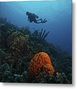 Scuba Diver Swims Underwater Amongst Metal Print