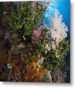 Sea Fan On Soft Coral In Raja Ampat Metal Print