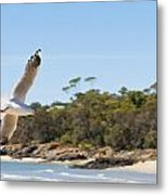Seagull Spreads Its Wings On The Beach Metal Print