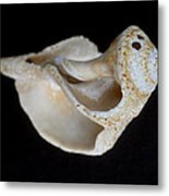 Seashell 032 Metal Print