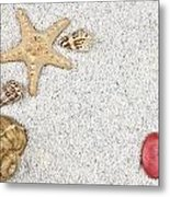 Seastar And Shells Metal Print by Joana Kruse