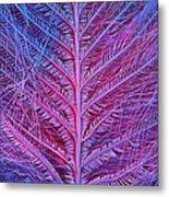 Sem Of Eastern Bluebird Feathers Metal Print