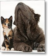 Shar Pei Puppy And Tortoiseshell Kitten Metal Print