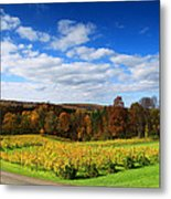 Six Miles Creek Vineyard Metal Print