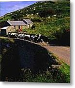 Slea Head, Dingle Peninsula, Co Kerry Metal Print