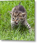 Small Kitten In The Grass Metal Print