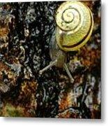 Snail, Pointe-des-cascades, Quebec Metal Print