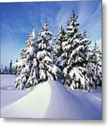 Snow-covered Pine Trees Metal Print