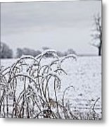 Snow Covered Trees And Field Metal Print by John Short