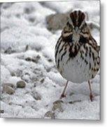 Snow Sparrow Metal Print