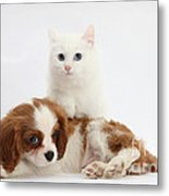 Spaniel Puppy And Kitten Metal Print