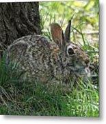 Spring Time Rabbit Metal Print