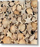Star Sand Foraminiferans Metal Print