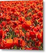 Sun Poppies Metal Print