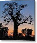 Sunset Baobab Metal Print