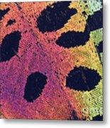 Sunset Moth Urania Ripheus Metal Print