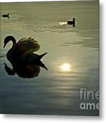 Swan And Ducks Metal Print