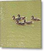 Swimming Ducks Metal Print by Corinne Elizabeth Cowherd