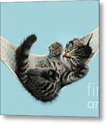Tabby Kitten In Hammock Metal Print