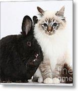 Tabby-point Birman Cat And Black Rabbit Metal Print