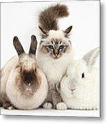 Tabby-point Birman Cat And Rabbits Metal Print