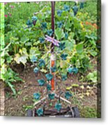 The Vinyard Metal Print