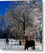 Thoroughbred Horses, Mares In Snow Metal Print by The Irish Image Collection