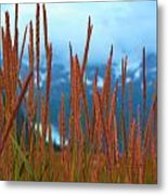 Through The Looking Grass  Metal Print