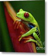 Tree Frog 19 Metal Print