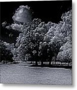 Trees At The Carabobo Field Metal Print