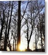 Trees With Sunlight Metal Print