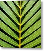 Tropical Palm Frond Metal Print