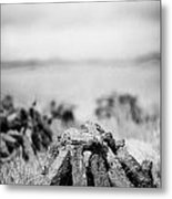 Turf Peat Stacked For Drying On The Bog In Ireland Metal Print