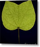 Two Lobed Leaf Metal Print