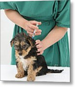 Vet Giving Pup Its Primary Vaccination Metal Print
