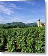Vineyard. Regnie-durette. Beaujolais Wine Growing Area. Departement Rhone. Region Rhone-alpes. Franc Metal Print